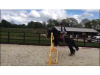 13.1 pony for sale