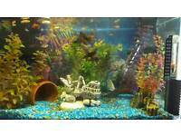 55 litre tropical fish tank