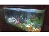 Tropical fish tank and contents
