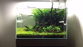 genuine ADA 60-p Aquarium fish tank 60L (13g)