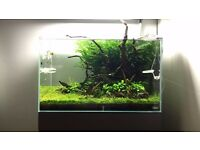 genuine ADA 60-p Aquarium fish tank 60L (13g)