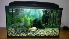 Aquael 90L Fish Tank