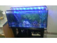 aqua one 3ft fish tank full set up