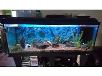 4ft fish tank with fish