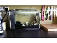 Fluval spec 19 fish tank