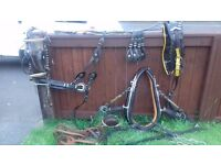Horse driving harness black and yellow with collar