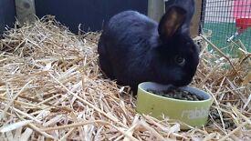 black female rabbit and hutch