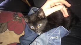 Gorgeous tabby kitten