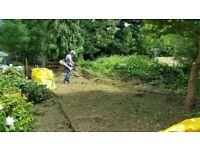Garden maintenance-Lawn Mowing - Grass cutting -Garden Tidy up- Gardening services - Local gardener