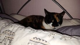 Female cat needing new home