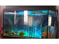 Fish and 60L JUWEL Tank For sale £85