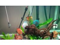 Urgent sale needed 3ft fish tank