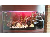 fish tank for sale including some fish plus accessories