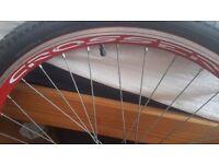 Bike rims 26 x1.95 full wheels in good condition!