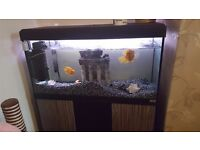 Great Fish Tank & Storage Unit For Sale