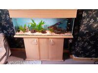 335 litre fish aquarium comes with pump,filter light and gravel plus ornaments