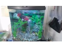 fish tank 110ltr full cold water set up with fish
