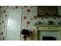 Painter is looking to take on new jobs houses flats etc