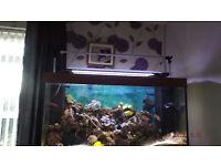 marine led lighting fishtank
