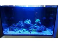 Marine tank coral breakdown