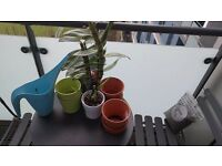 Assorted IKEA Pots, Watering Can and Orchid