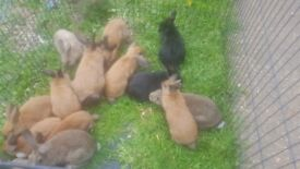 baby rabits for sale