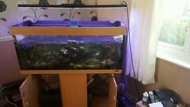 4ft Jewel marine fish tank
