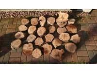 Elm tree wood slices