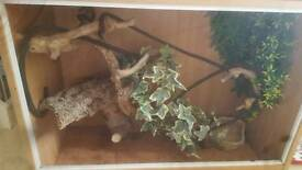 Viv with climbing wood