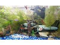 Complete Fish tank /fish/plants/ornaments/gravel/sand/pump/heater/glass cleaner ......ect