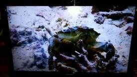 TOSHIBA 37BV701B 37 Inch tv
