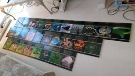 The Illustrated Encyclopedia of Wildlife Set (Some missing)