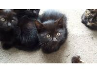 LOVELY AND PLAYFULL KITTENS (male and female) READY TO GO