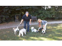 Dog Walkers Tails :- Friendly & Reliable Dog Walking Service You Can Trust