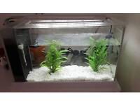 Fish tank. Light & heater