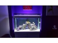 Fish tank marine set up included