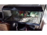 Black fish tank and stand