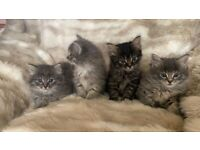 4 beautiful kittens, ready for their forever homes today