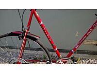 """Road Racer, 23 """"(59cm.) frame (adult )."""