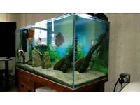 Discus fish tank for sale