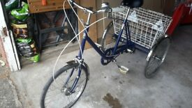 Pashley Tricycle (adult)