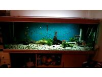 6ft x2ft x2ft fish tank with fish and accessories