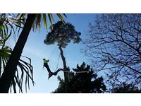 Tree Surgeon Available For EMERGENCY Windblown Trees , Over 20 yrs experience , Fully Insured
