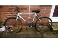 Adult bike for sale