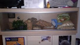 4ft reptile vivarium full set up for snake excellent condition heat mat lamp water bowls decorations