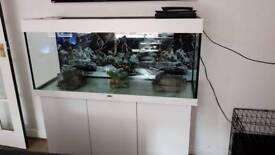 240l white fish tank