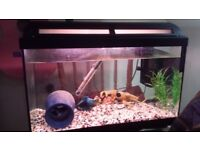 64 litre filter and heater and 3 convect fishes