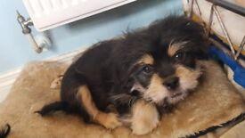 Last pup