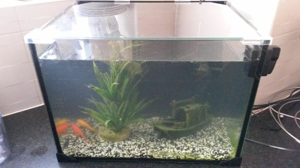 2 Goldfish and tank for sale | in Liverpool, Merseyside | Gumtree