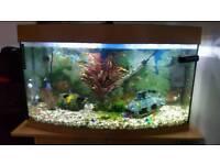 Fish Tank 180 Litre Juwel